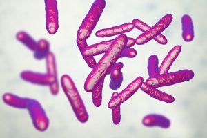 Eje microbiota-intestino-cerebro. Una introducción.