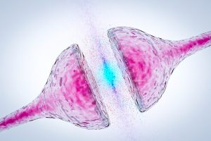 Vías de comunicación eje intestino-cerebro