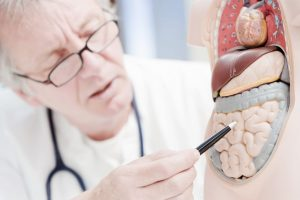 Microbiota, un órgano endocrino
