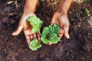 Dietas saludables y sostenibilidad ambiental