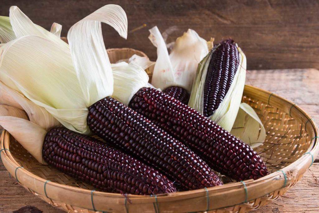 maíz morado