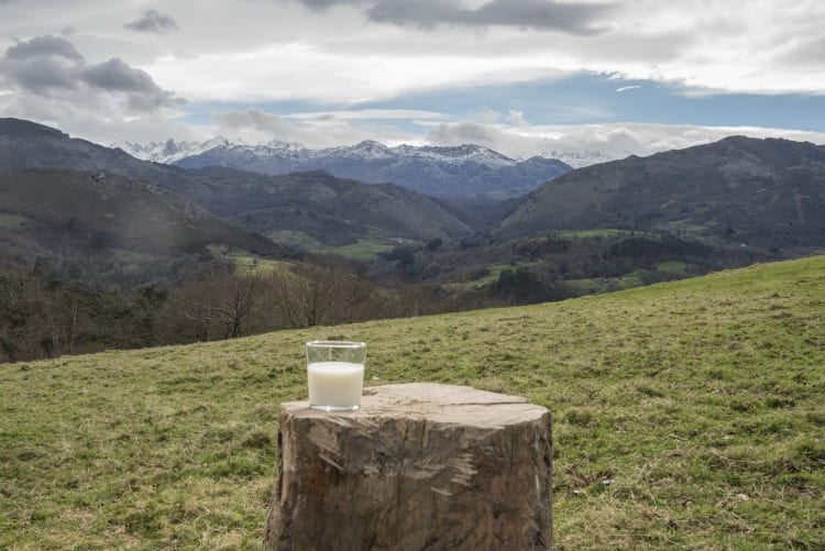leche central lechera asturiana