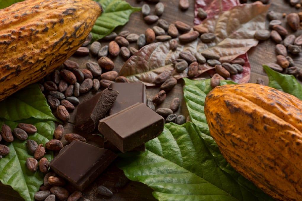 imagen de cacao